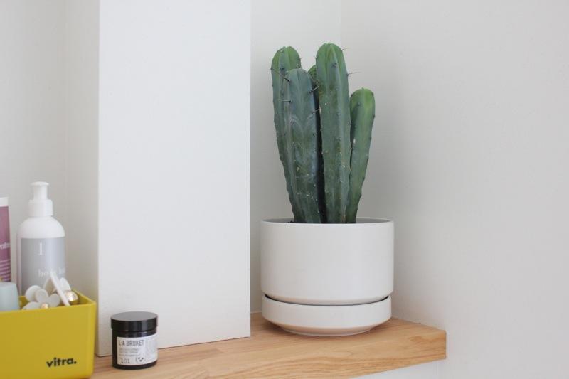 Kaktus_arabia_finland