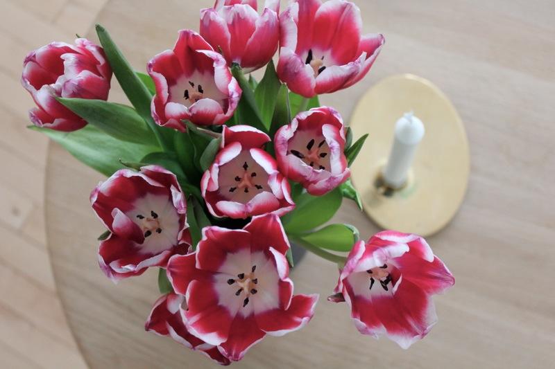 Tulipaner_georg_jensen_stage