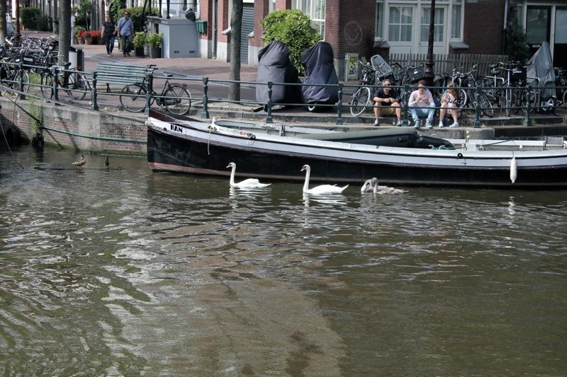 Swans_amsterdam