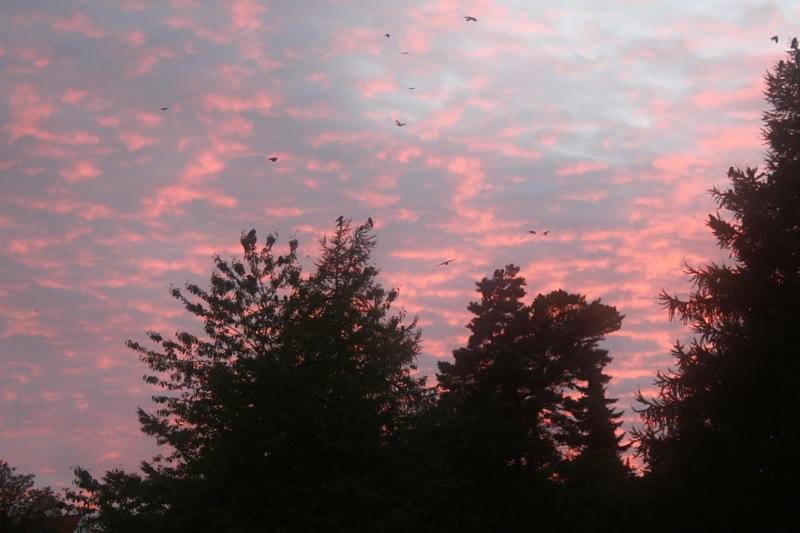 Solnedgang_september_aalborg