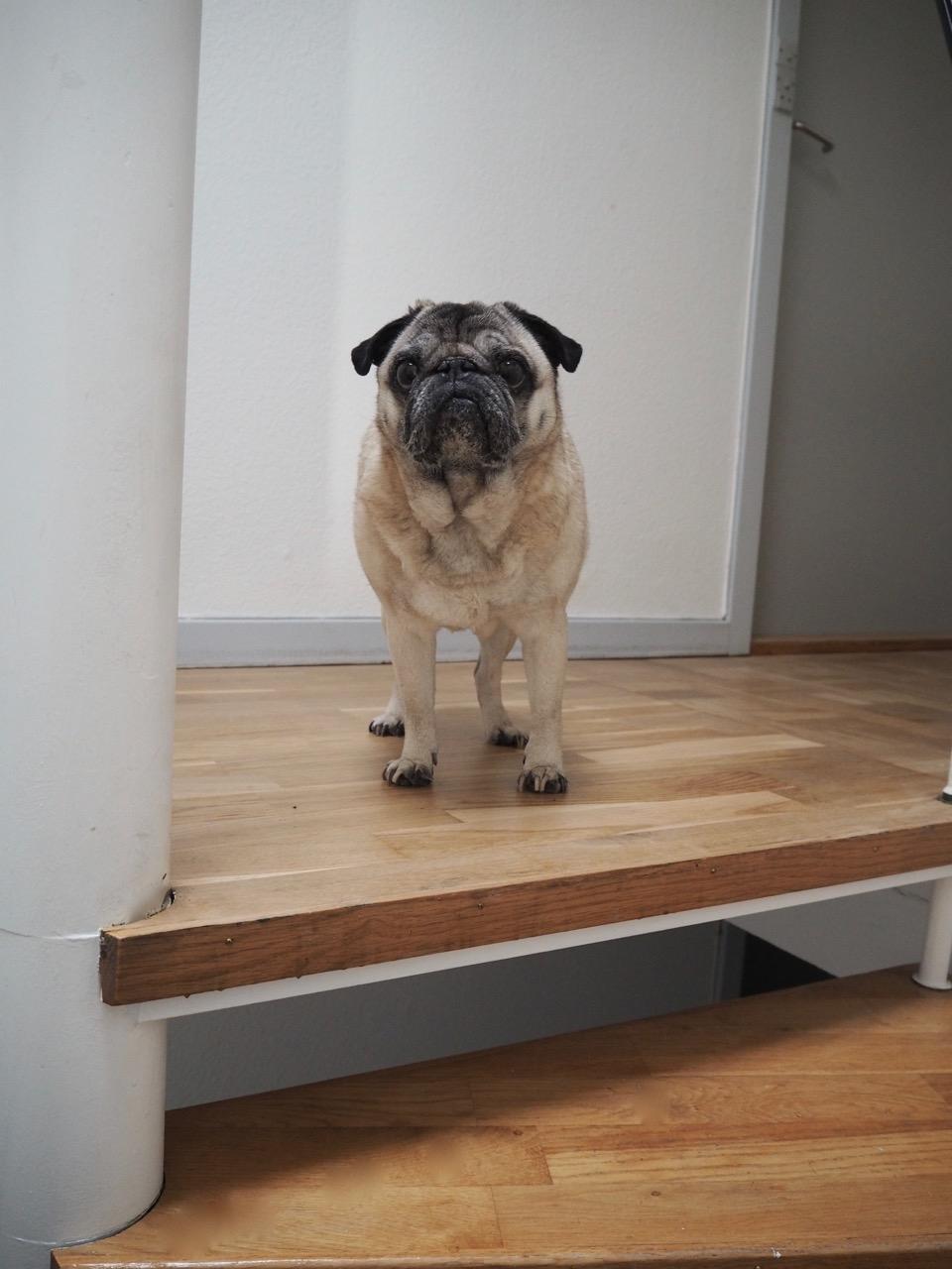 Anton_trappenedgang_vindeltrappe